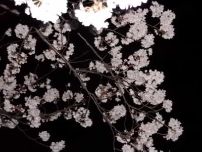 夜桜 003.jpg