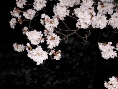 夜桜 004.jpg