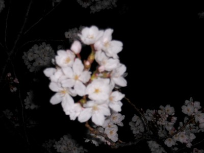 夜桜 006.jpg