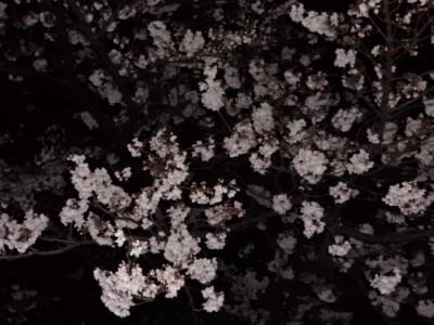夜桜 008.jpg