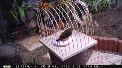 小鳥 004.jpg