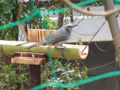 小鳥 009.jpg