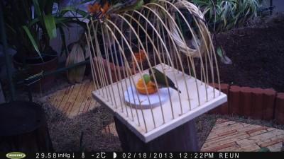 小鳥 021.jpg