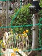 小鳥 072.jpg